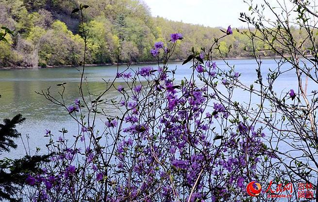 2018吉林龙湾野生杜鹃花卉旅游节:魅力龙湾 绿美发展